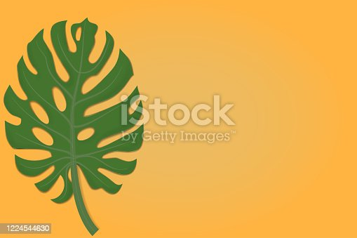istock Leaf of Monstera on the yellow background 1224544630