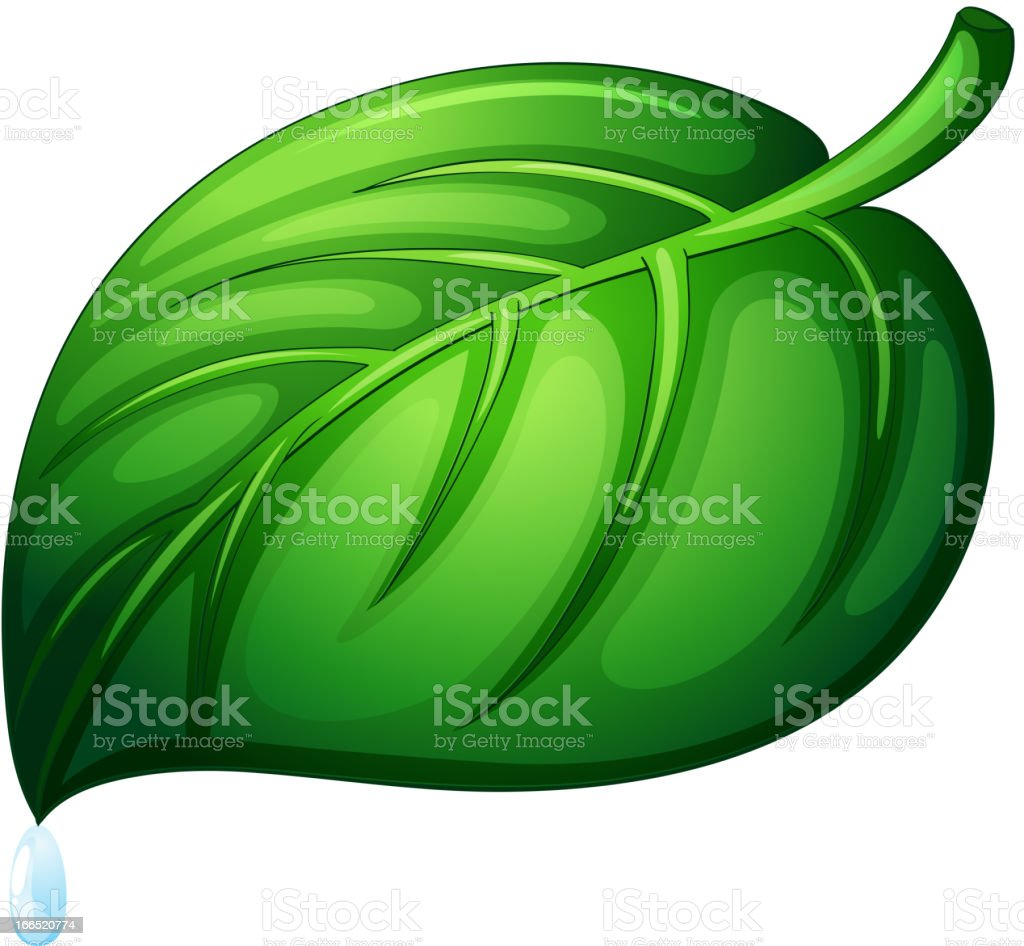 Leaf on white royalty-free leaf on white stock vector art & more images of bead