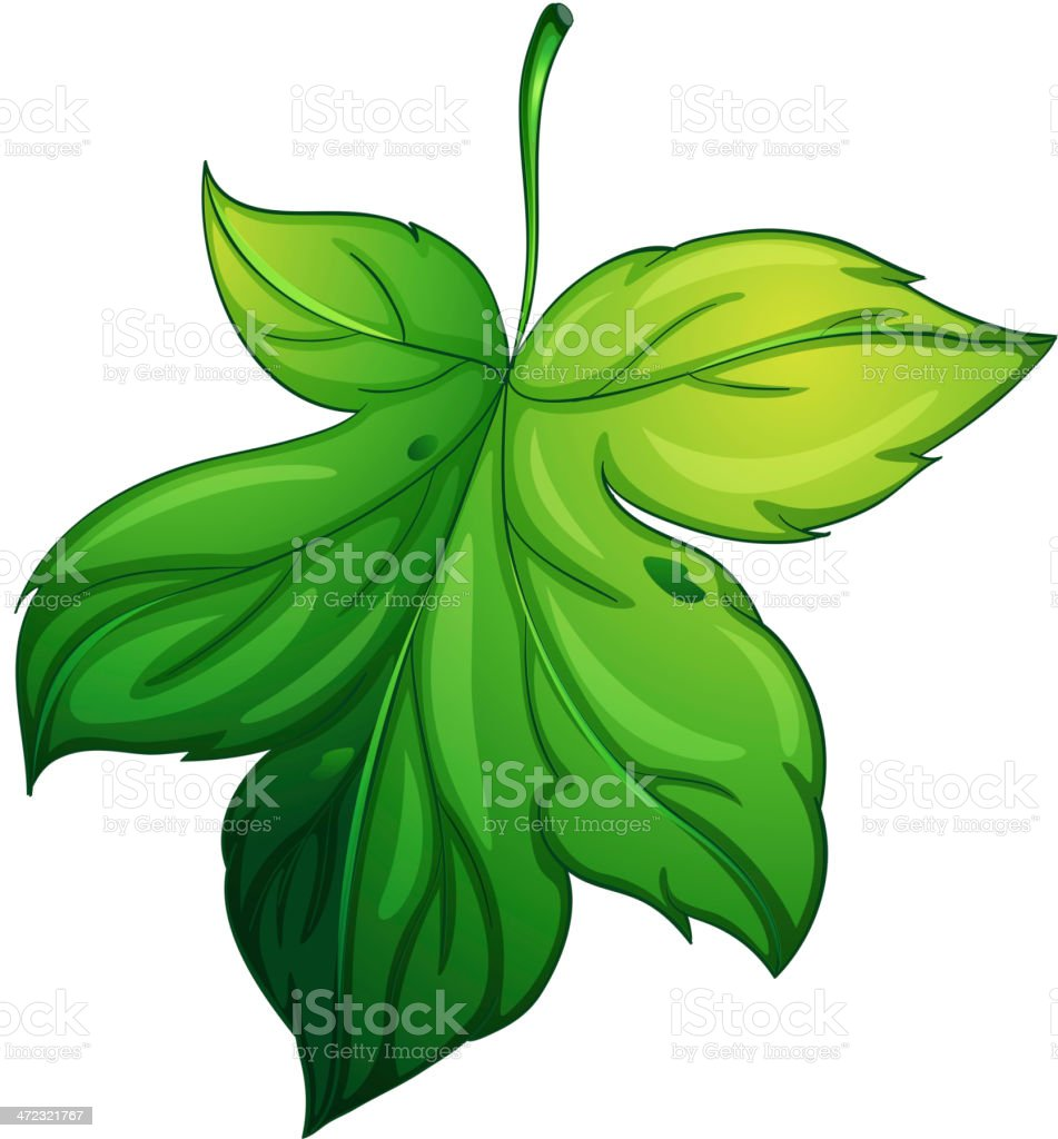 Leaf on white royalty-free leaf on white stock vector art & more images of botany