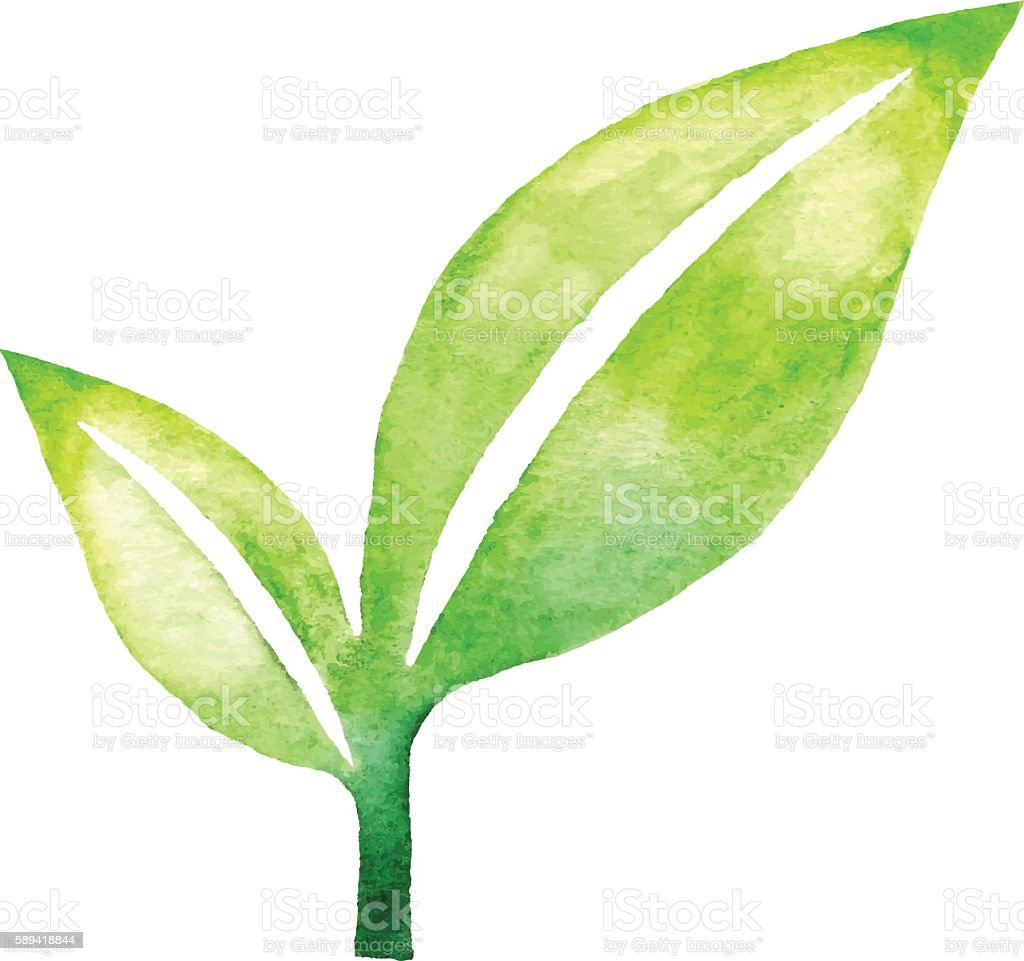 Leaf Pair Watercolor vector art illustration