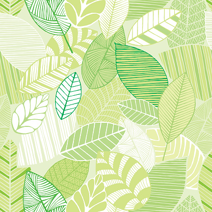 Vector Illustration of Leafs - Hand Drawing
