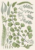 Leaf set. Vintage floral background. Vector design elements. Isolated. Botanical illustration.