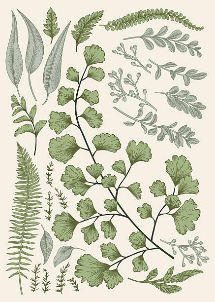 Leaf set. Leaf set. Vintage floral background. Vector design elements. Isolated. Botanical illustration. ginkgo stock illustrations