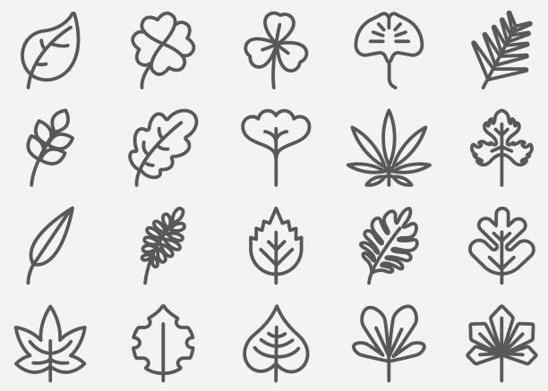 illustrazioni stock, clip art, cartoni animati e icone di tendenza di leaf shape line icons - foglie