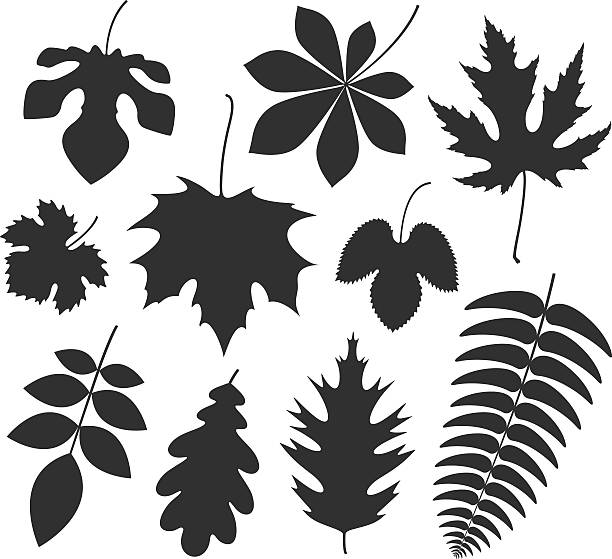 Leaf. Silhouette eps maple leaf stock illustrations
