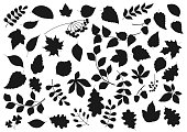Tree leaves and plant seeds isolated nature and flora silhouette icons. Vector forest tree leaf of maple, birch, elm and chestnut, poplar, rowan berries and oak acorns, aspen and poplar sprout twigs