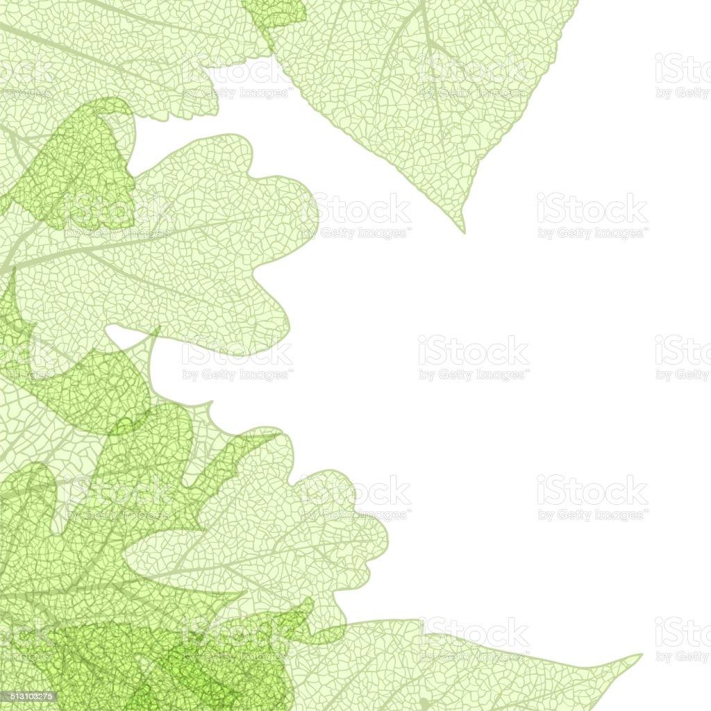 Leaf skeletons autumn tenplate. EPS 10 vector art illustration