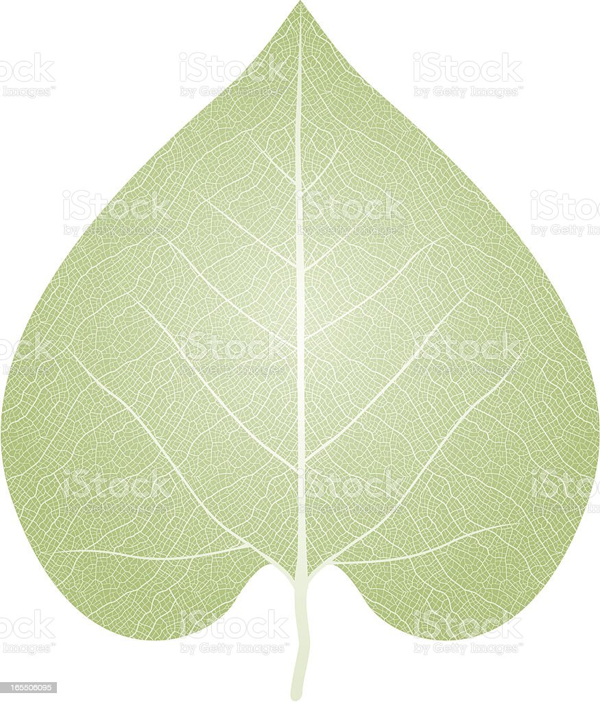 Leaf royalty-free leaf stock vector art & more images of cut out