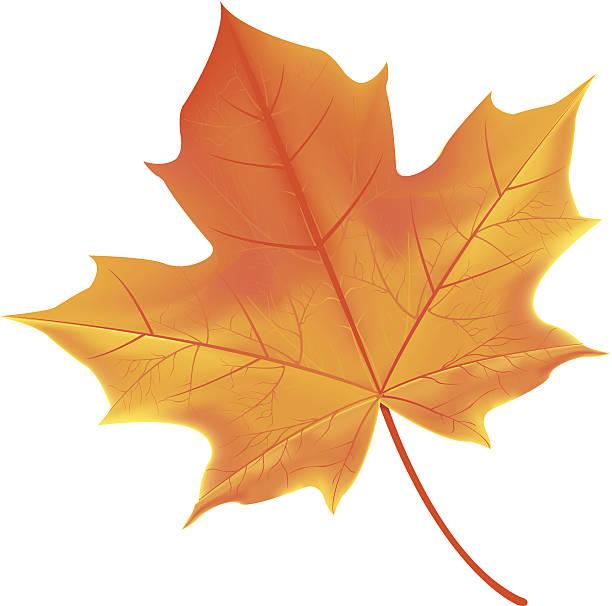 leaf – Vektorgrafik