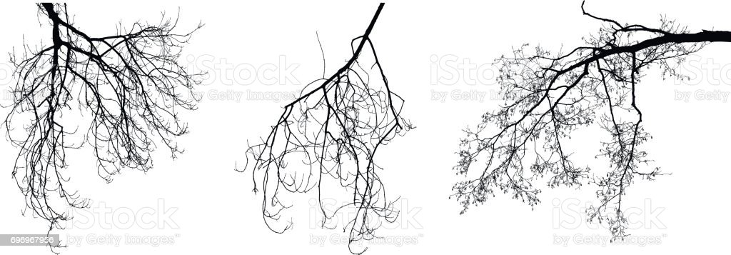 Leafless branches vector art illustration