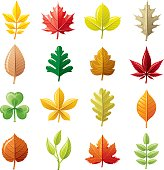 Icon set with 12 colorful autumn and summer leafs and plants
