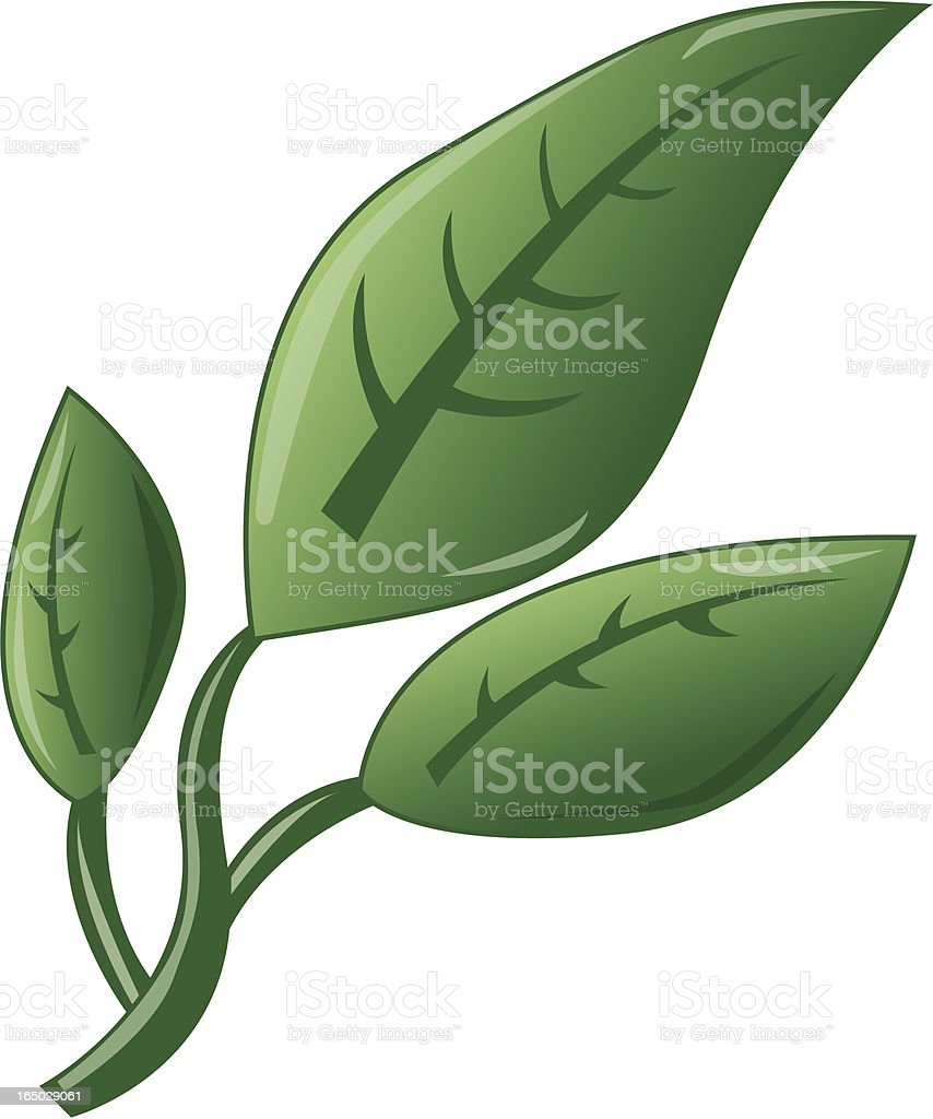 Leafs royalty-free leafs stock vector art & more images of bud