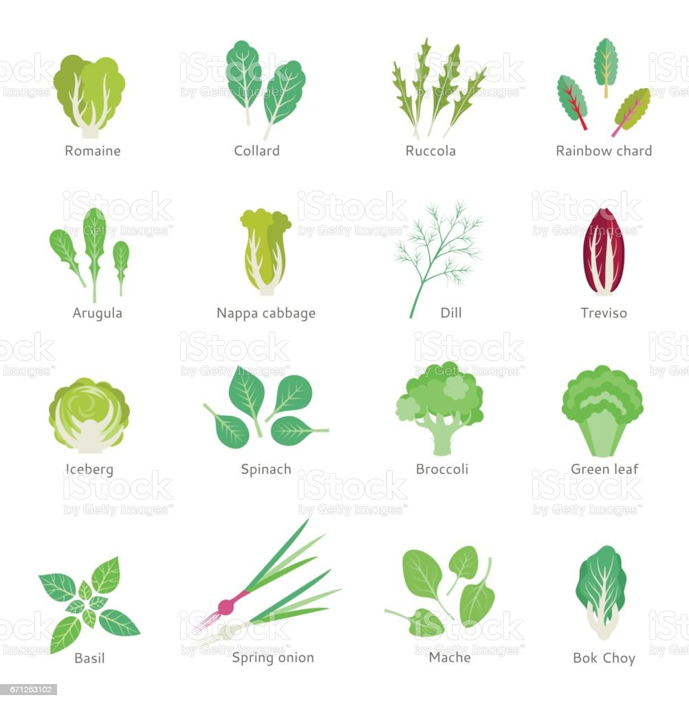 Leafy vegetables vector flat icons set. vector art illustration