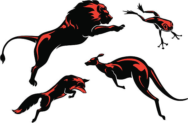 Leaping Animals Set Variations of jumping animals in simplified form. Properly grouped elements, with high resolution jpg.  More Wild Animals Series Lightbox kangaroo stock illustrations