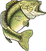 istock Leaping Bass 97743291