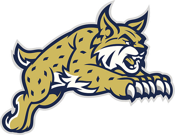 Leaping Bobcat Mascot This leaping Bobcat mascot is great for any school based design. bobcat stock illustrations
