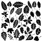 Leaves, acorn black silhouettes, distressed. Isolated on white background sketch hand drawn set