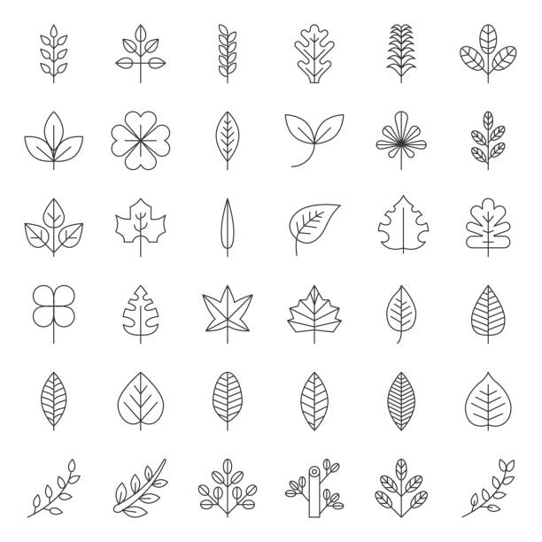 illustrazioni stock, clip art, cartoni animati e icone di tendenza di leaves and branch icon set, thin line design - foglie