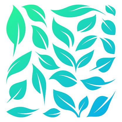 Leaves and Leaf Symbols