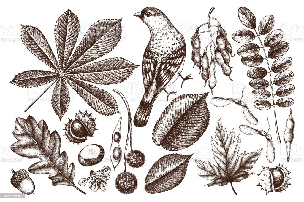 Leaves and seeds illustrations collection vector art illustration