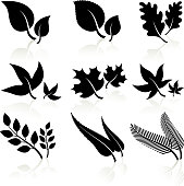 leaves black and white