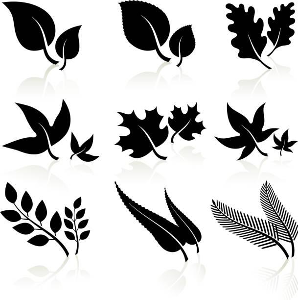 stockillustraties, clipart, cartoons en iconen met leaves black and white - klimop