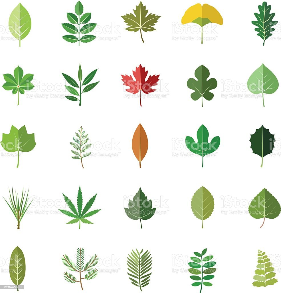 Leaves color vector icons vector art illustration