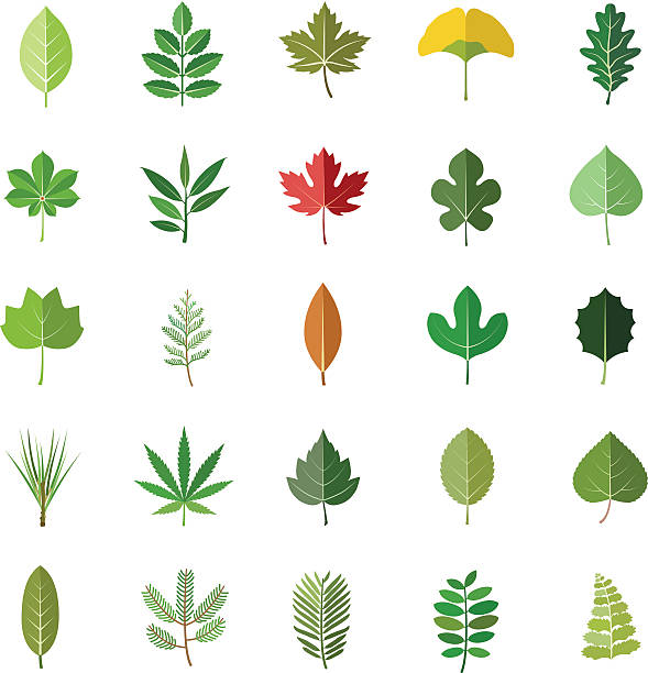 Leaves color vector icons Leaves color vector icons ginkgo stock illustrations