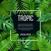 Leaves frame. Vector design template with nature green plants tropical picture with place for your text