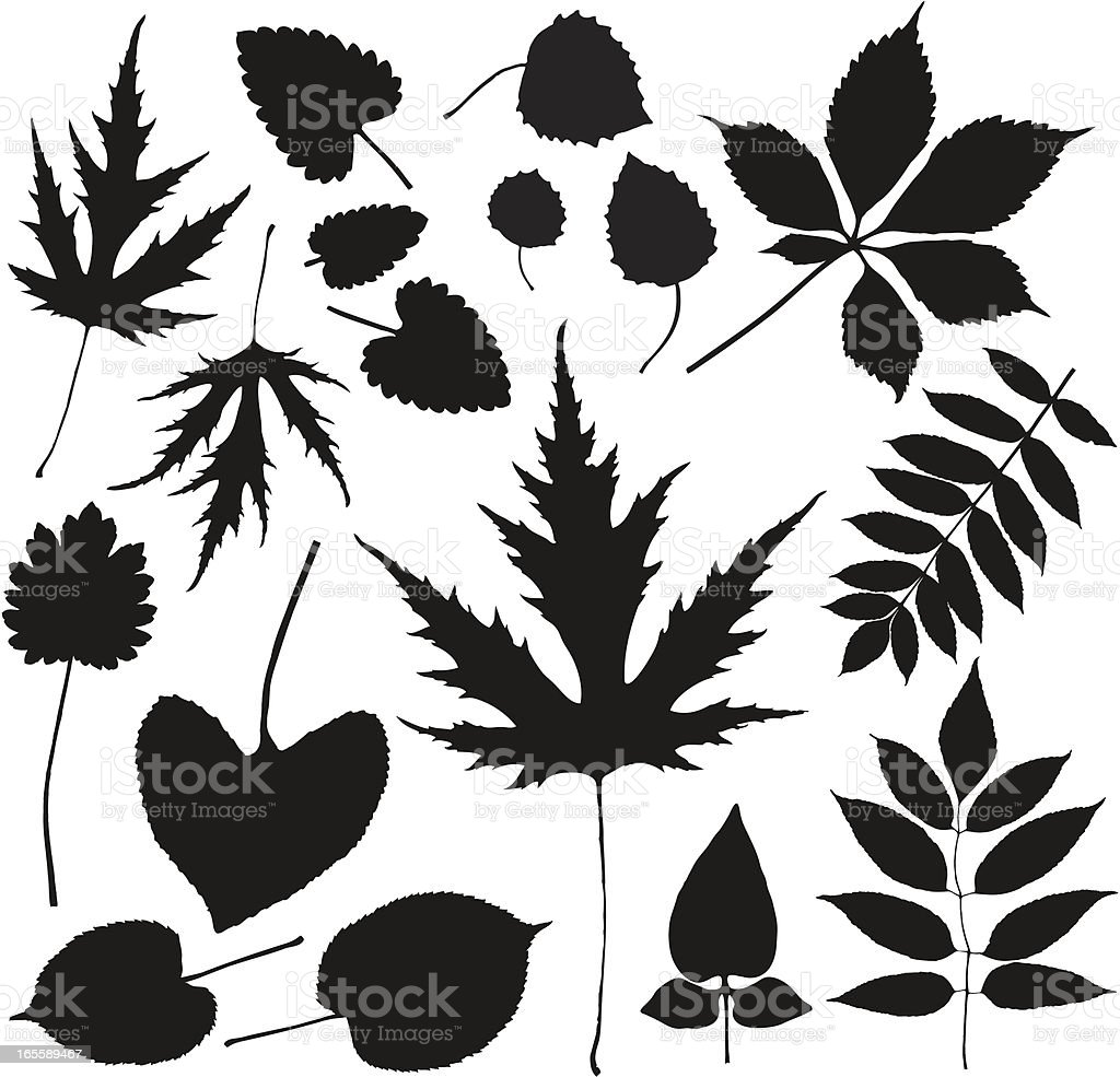 Leaves from the forest floor 1 royalty-free stock vector art