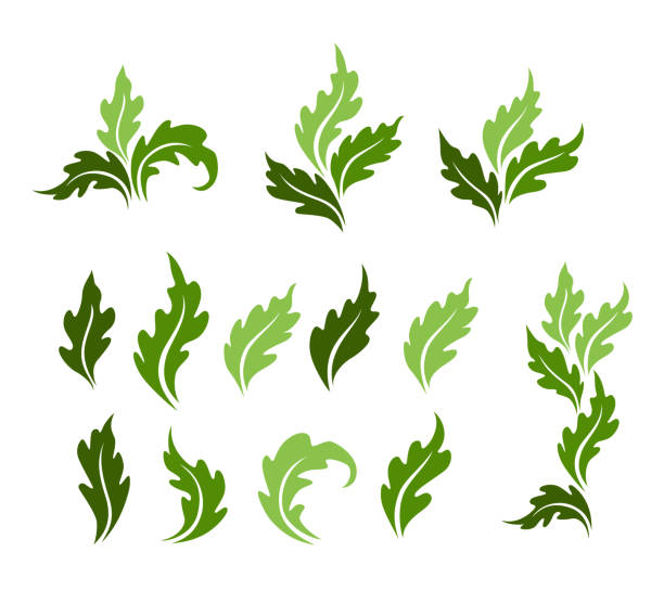 Leaves icon collection, Set vector isolated decorations. Leaves icon collection, Set vector isolated decorations. oak leaf stock illustrations