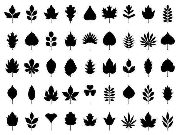 Leaves icon set Set of leaves. Geometric icon set. Vector design elements on white background autumn symbols stock illustrations