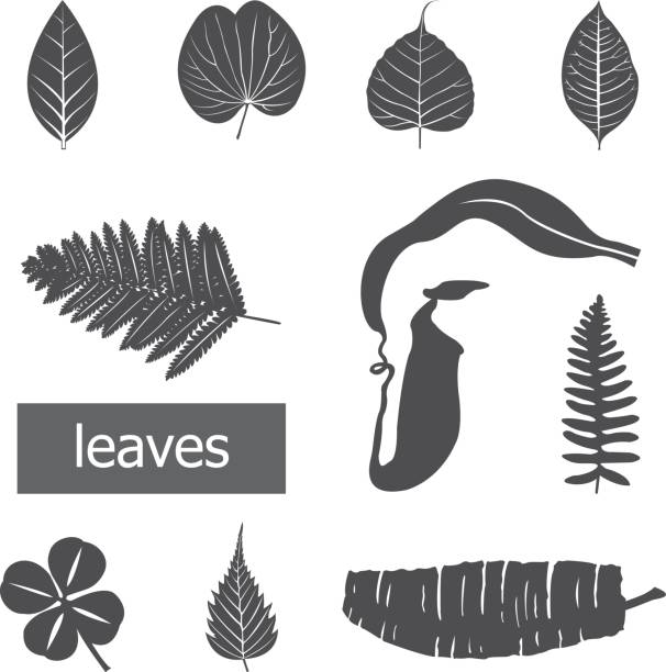 leaves icon set. - fossilized leaves stock illustrations