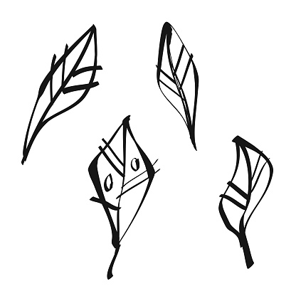 Leaves ink and sketch illustrations