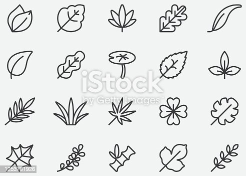 istock Leaves Line Icons 1253761926