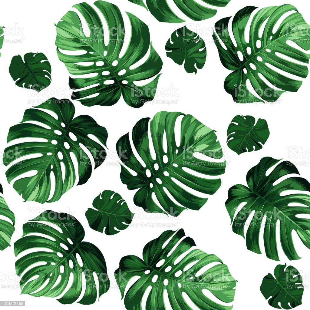 leaves monstera - ilustración de arte vectorial