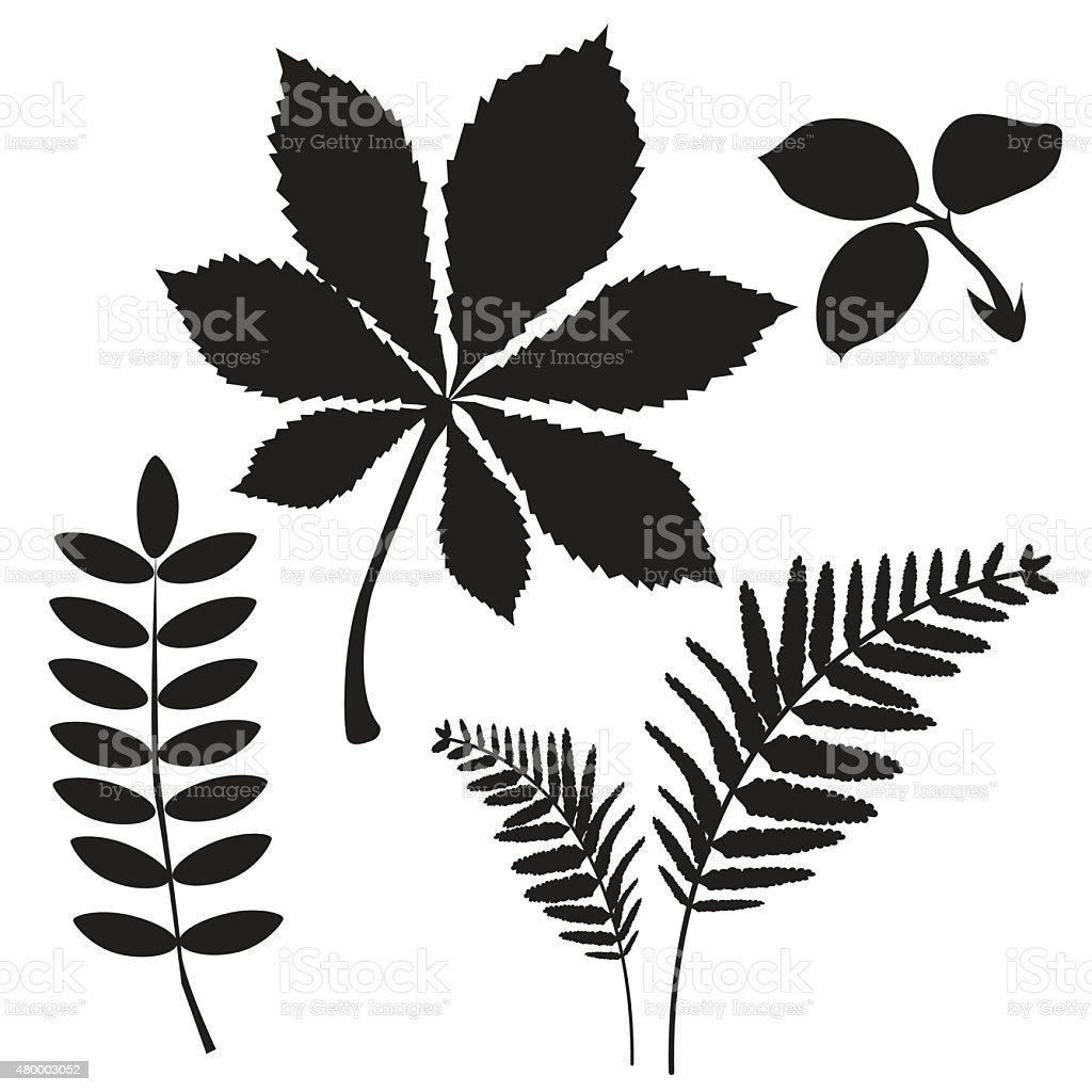 Leaves Of Grass. Colourless. Leaves Falling. vector art illustration