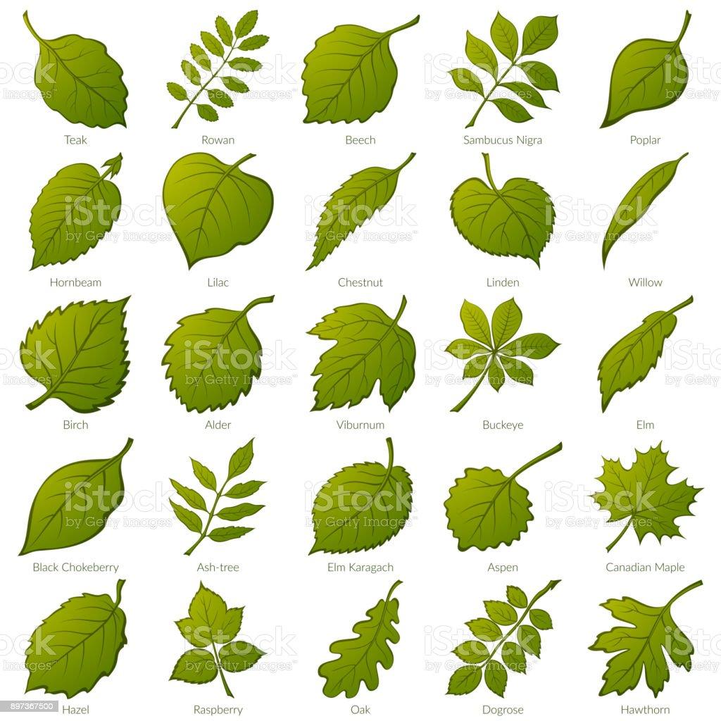 Leaves of Plants, Set vector art illustration