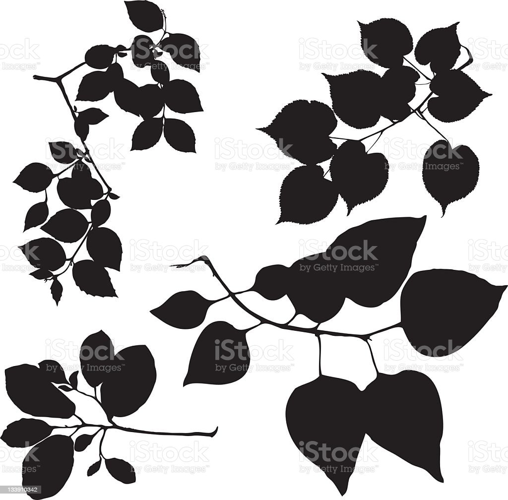 leaves on branches vector art illustration