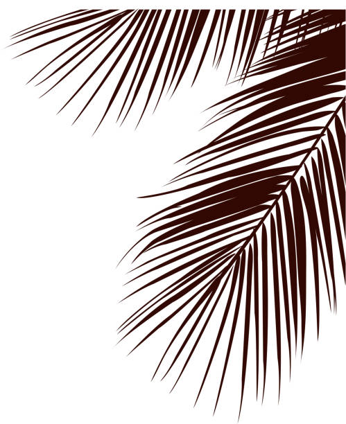 leaves on the trees - palm leaf stock illustrations, clip art, cartoons, & icons