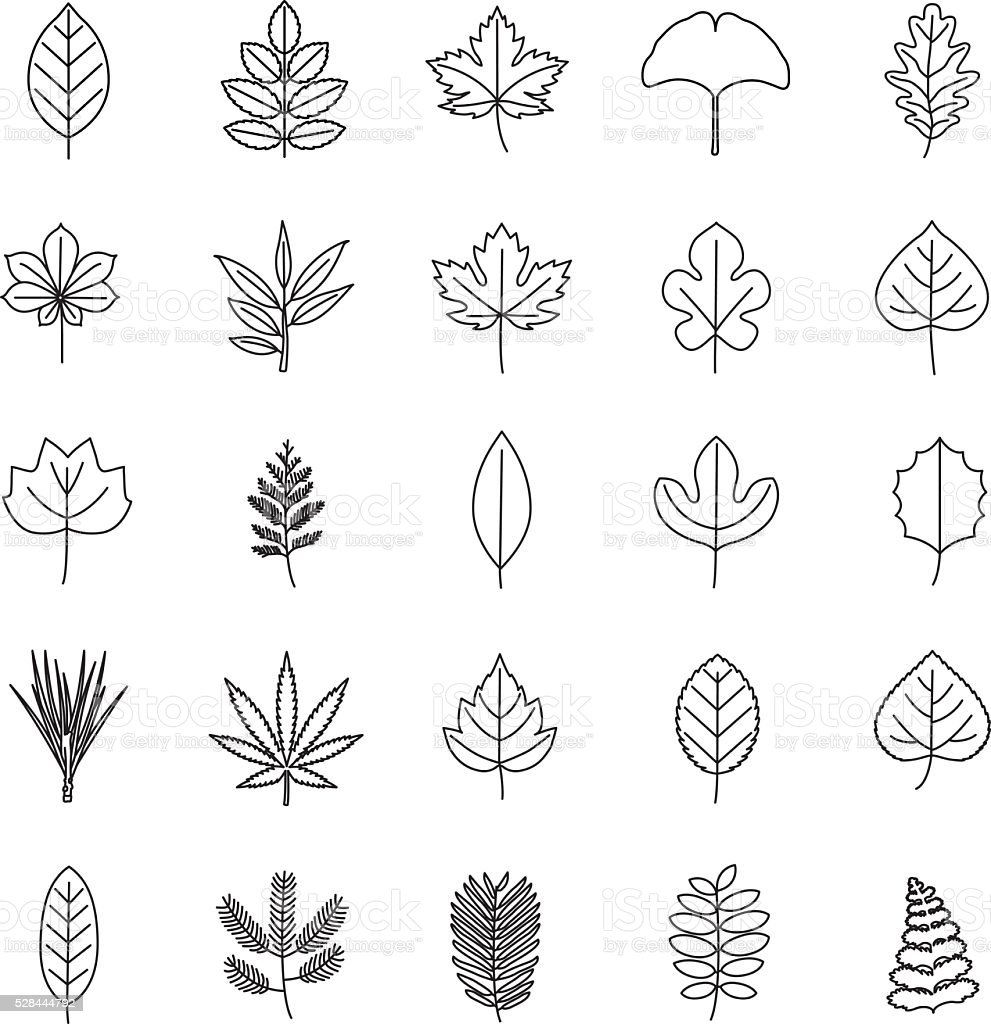 Leaves outlines vector icons vector art illustration