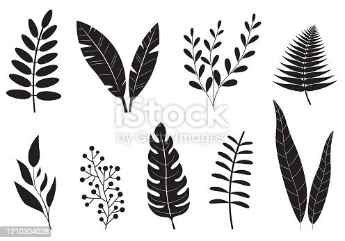 Leaves set. Different plants foliage. Leaf collection isolated on white background. Vector illustration.