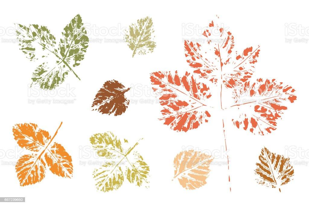 Leaves Set. Leaf imprints. Leaf print. vector art illustration