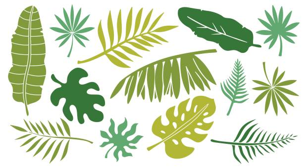 leaves set. tropical plants - palm leaf stock illustrations, clip art, cartoons, & icons