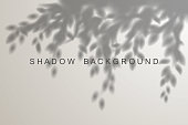 Leaves shadow effect on white background in vector