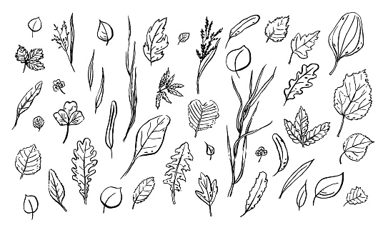 Leaves sketches set. Hand-drawn different herbs