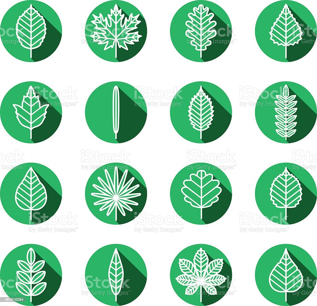 Leaves types green icons vector set. vector art illustration