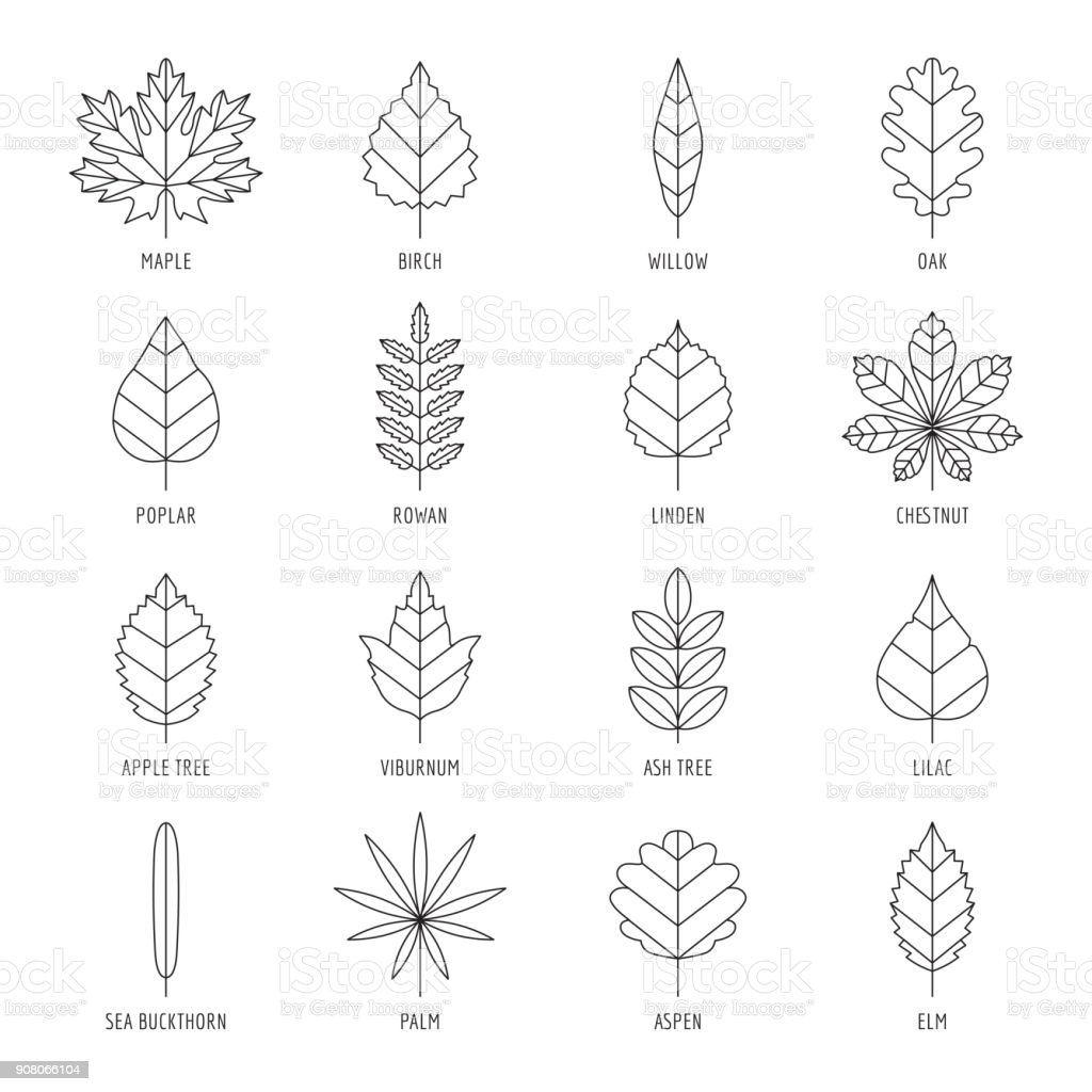Leaves types with names outline vector icon set. vector art illustration