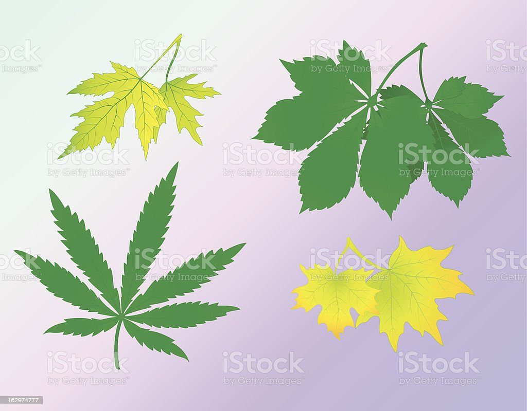 leaves royalty-free leaves stock vector art & more images of cannabis plant