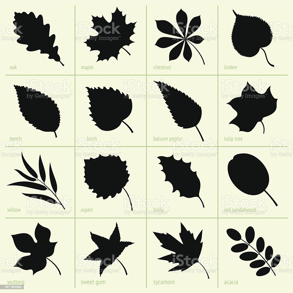 Leaves vector art illustration